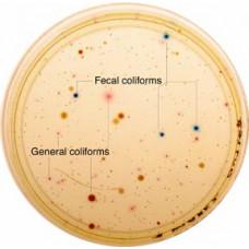 Koliform Bakteri Analizi