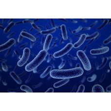 Toplam Bakteri 37 °C Analizi