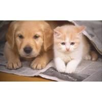 Temel Sağlık Kontrol Paneli (Kedi ve Köpek)